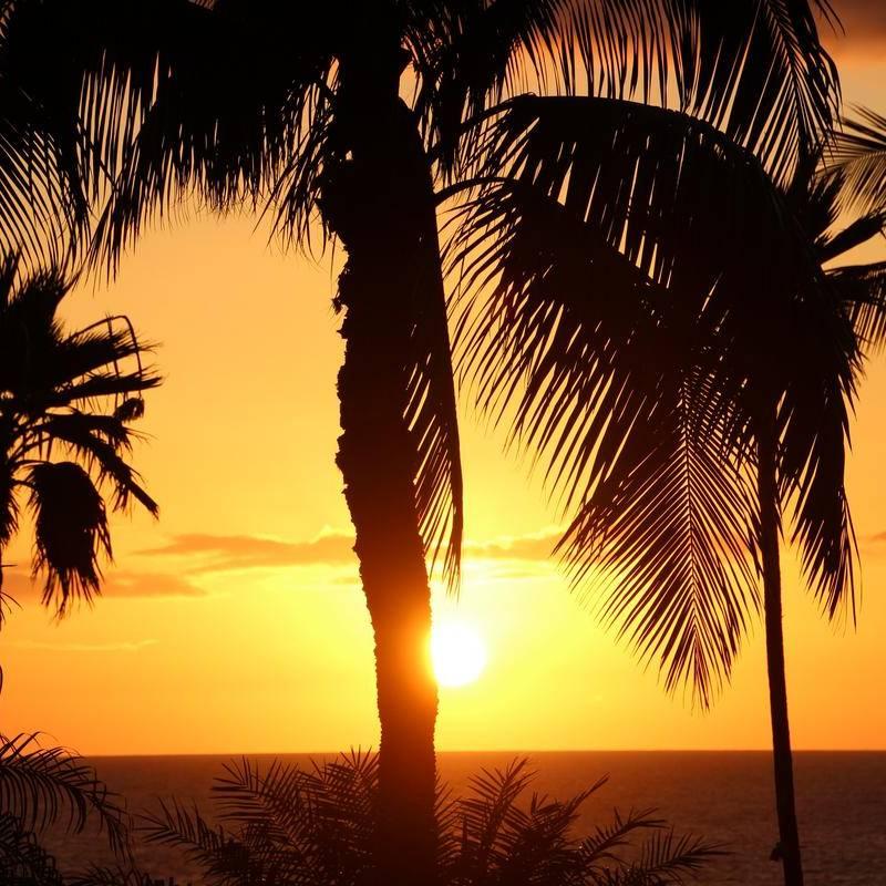 Lanama-Sonnenlicht-Vollspektrumlampe Referenz Sonne Hawaii